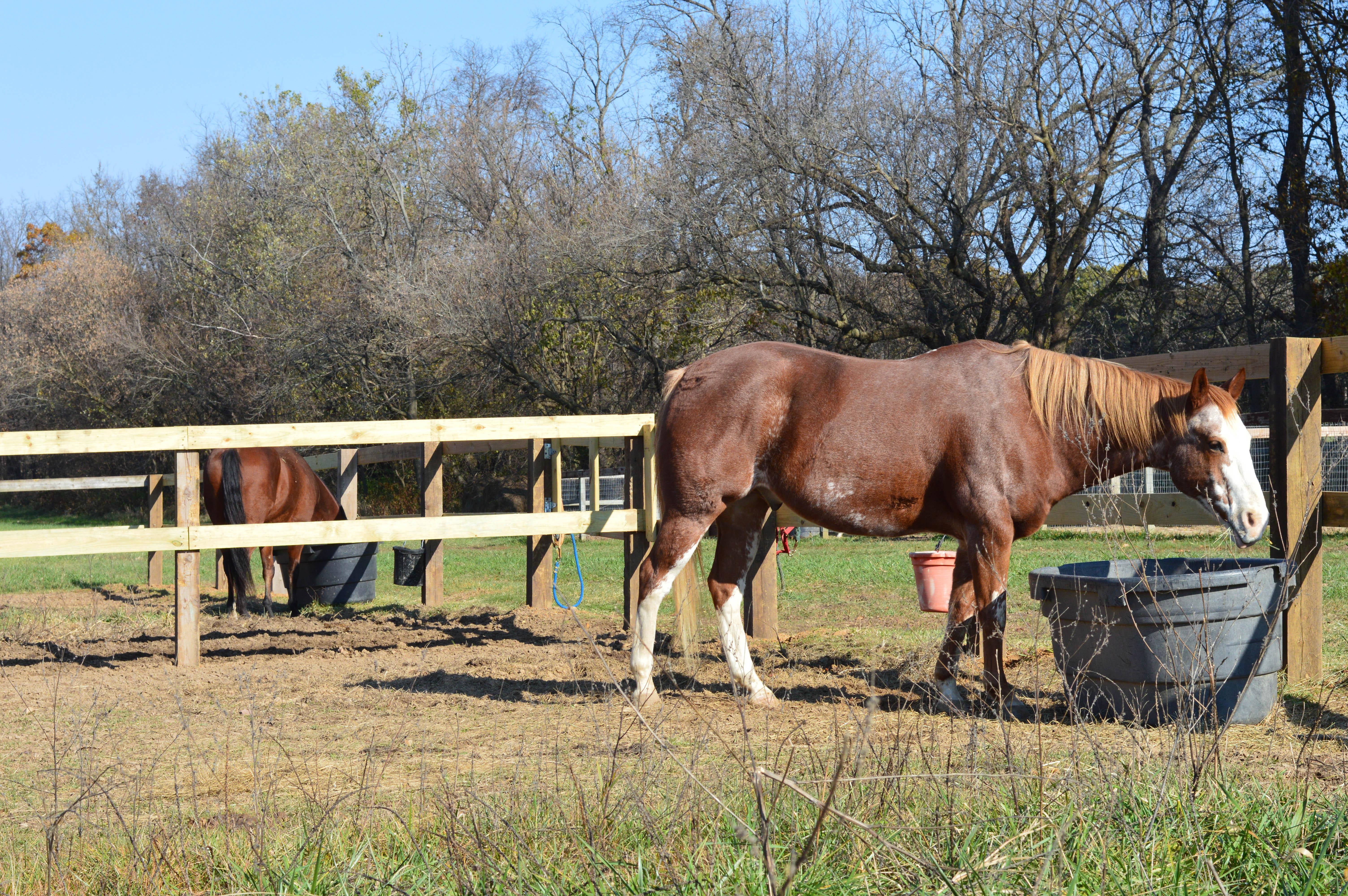 Horse Barn_Rockton_Illinois