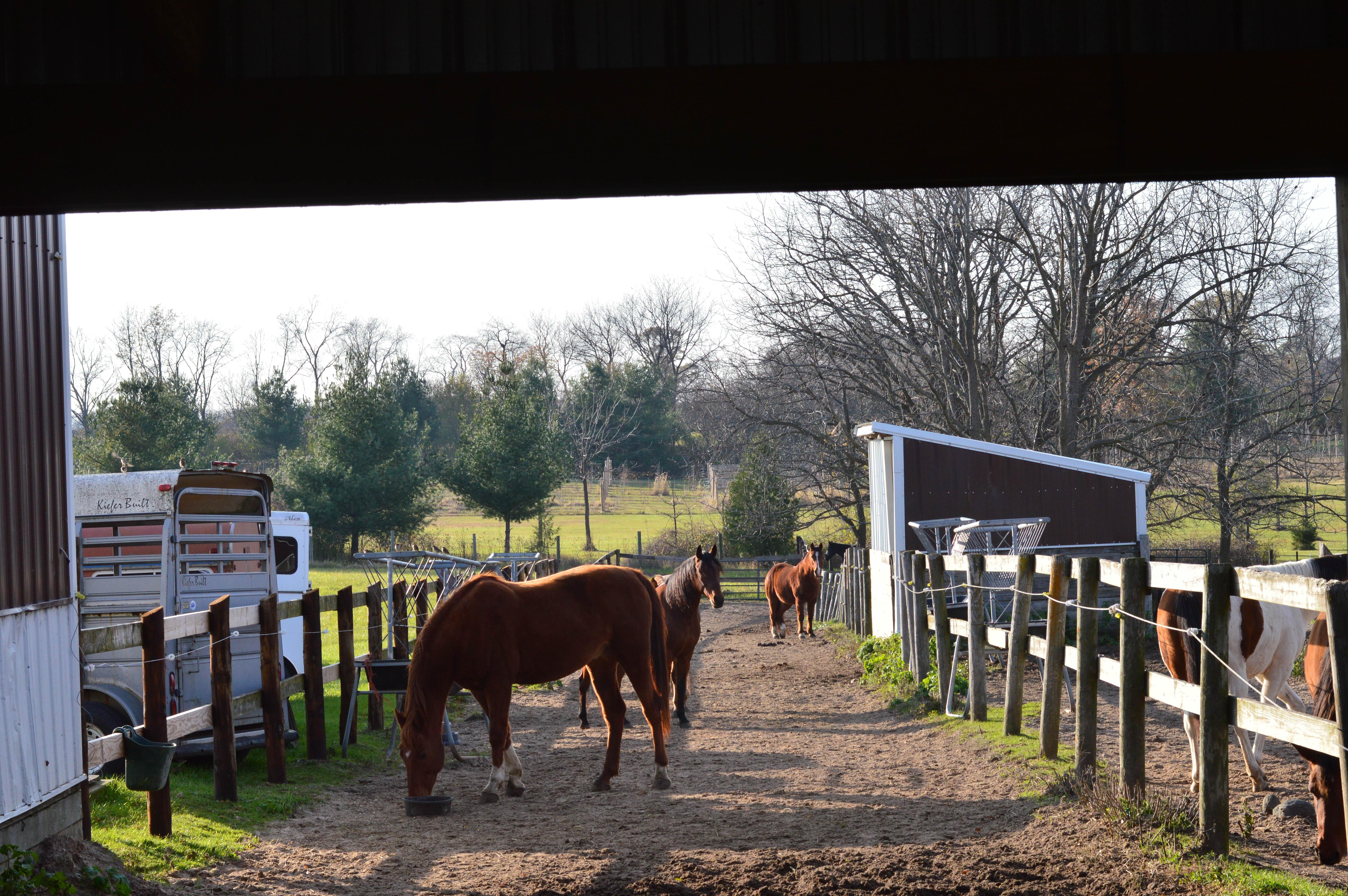 Horse Tack_Rockton_IL