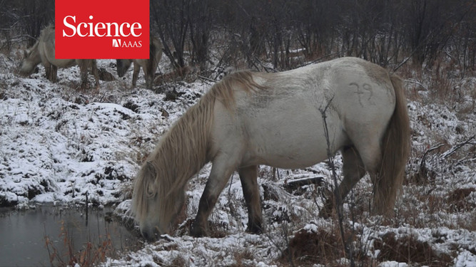 Pleistocene Park: Born to rewild