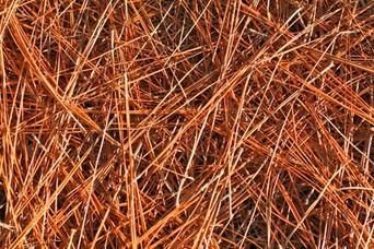 Long Leaf Pine Straw