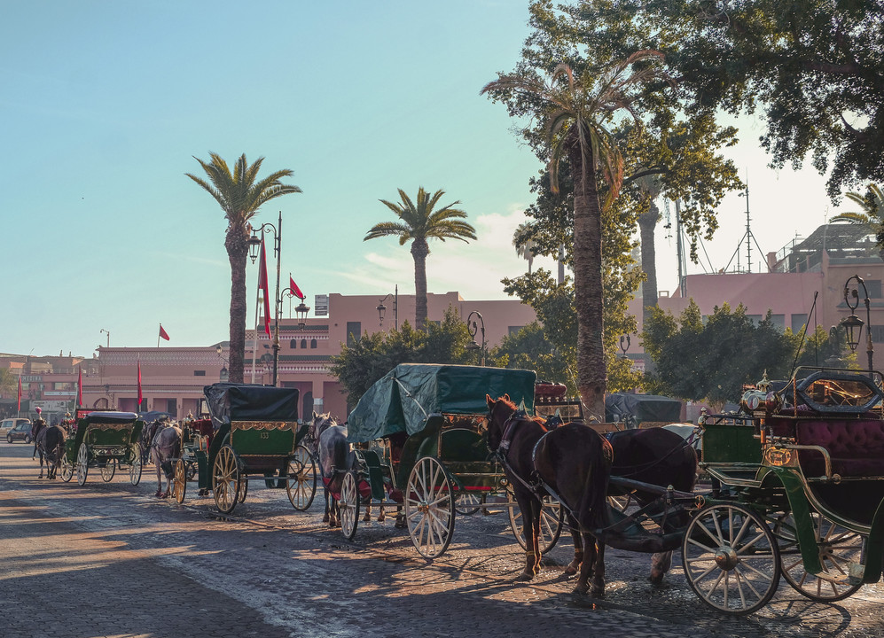A line of horse carriages and palm trees at the Jemaa el-Fna | RollingBear Travels