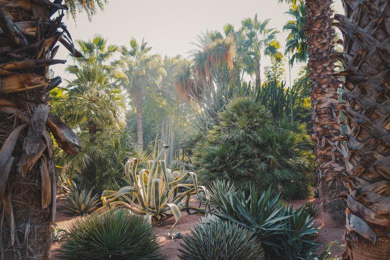 Le Jardin Majorelle ferns, Marrakech | RollingBear Travels