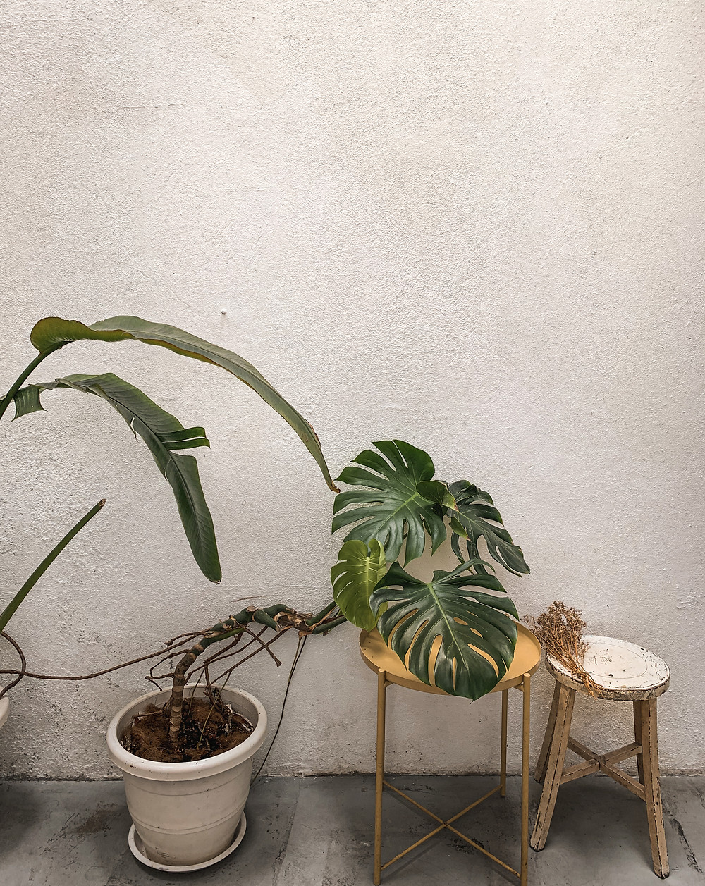 Cosy vibes : plants and wooden stools at Le楽, RollingBear Travels blog.
