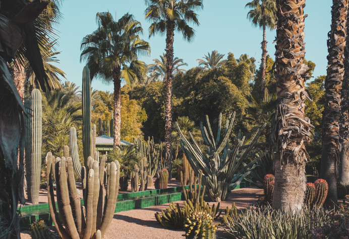 Cacti and palm trees at Le Jardin Majorelle, Marrakech | RollingBear Travels