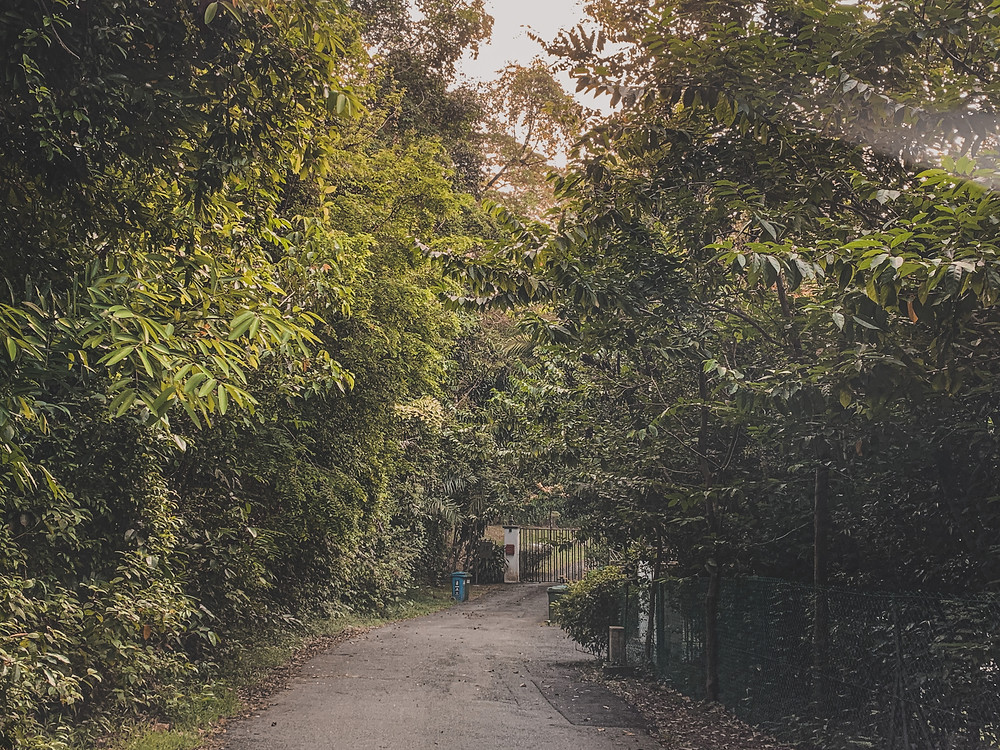 Rollingbear Travels blog/ Dark, narrow heritage road of Mount Pleasant in Singapore lined with mature saga trees