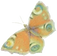 buterfly_1A-.png