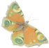 buterfly_1B-.png