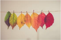 Colored leaves BOD Nov 2020 graphic.png
