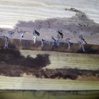 Active termite damage