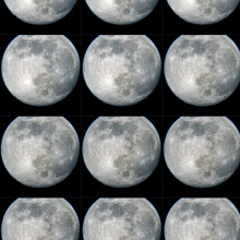 RoseDF.4.2020.Full Moon.jpg