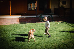 A boy and a dog playing in Margaret River
