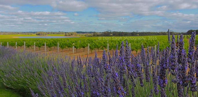 Watershed winery Margaret River