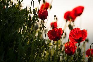 flowers-3506805_1920.jpg