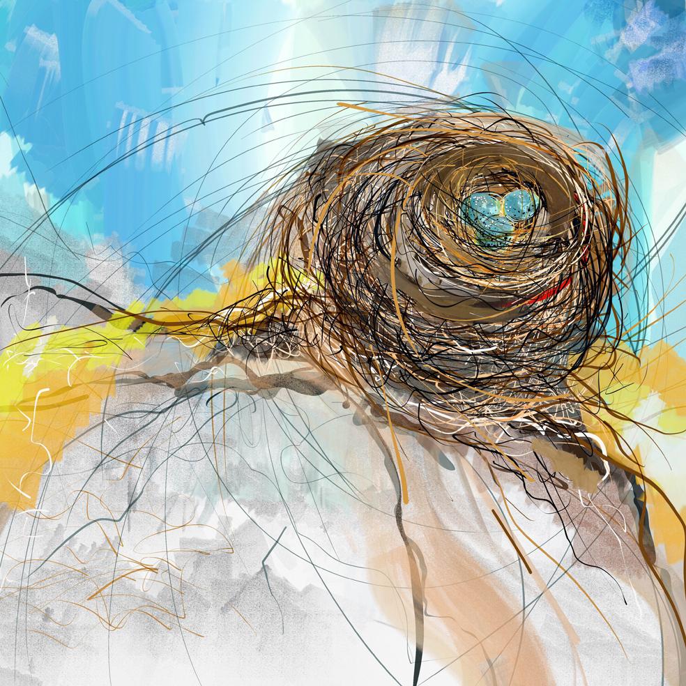 Nest study No 2