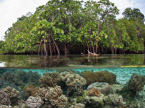 Mangrove-Biodiversity.jpg