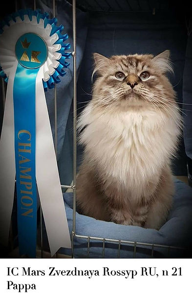 Internationell Champion