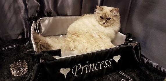 IC, Internationell Champion, kattunge