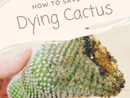 How to Save a Dying Cactus