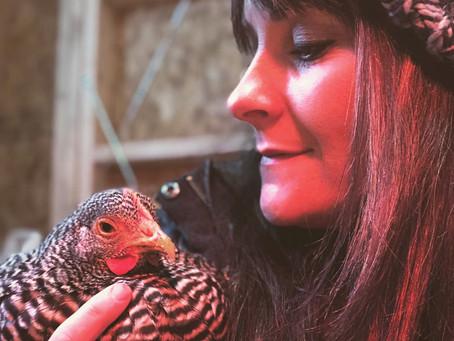 Tour My Chicken Coop