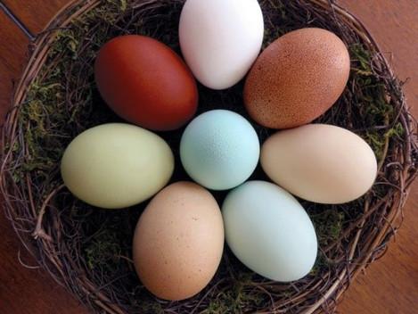 Eggs! Color & Quality