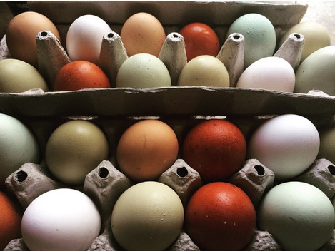 Managing Egg Production During Shorter Days