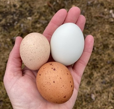 How to Support Eggshell Quality