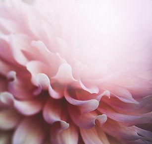 flowers-2609349_960_720.jpg