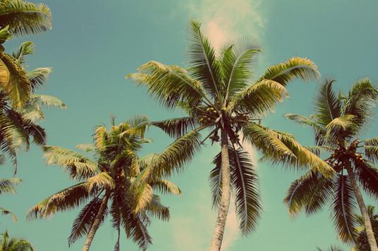 Les palmiers de la Côte d'Azur