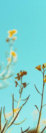 Plants Begin as Seeds.