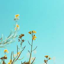 Plants peacefully reaching for the clean blue sky.