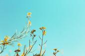 Bloeiende vrolijke bloemen