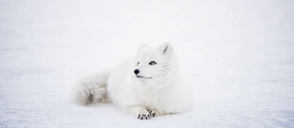 Natures incredible beings