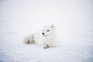 Picture of Fox from Wix