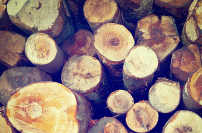עץ טבעי