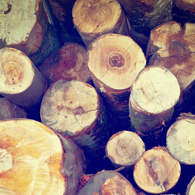 Logs for the wood burner