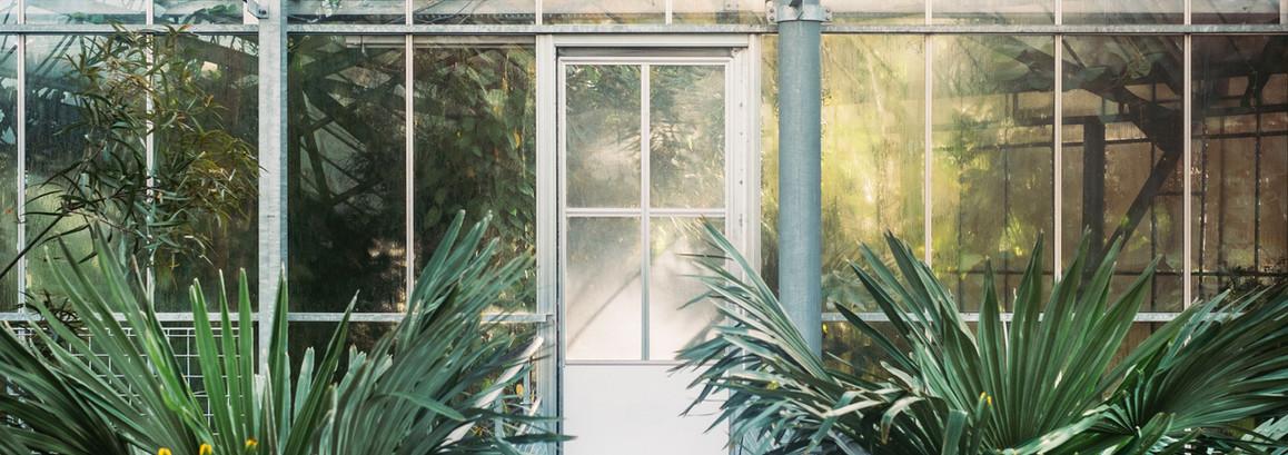 10 plantes qui attirent les énergies positives dans une maison