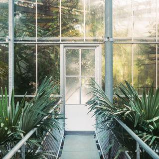 Lush Green Walkway