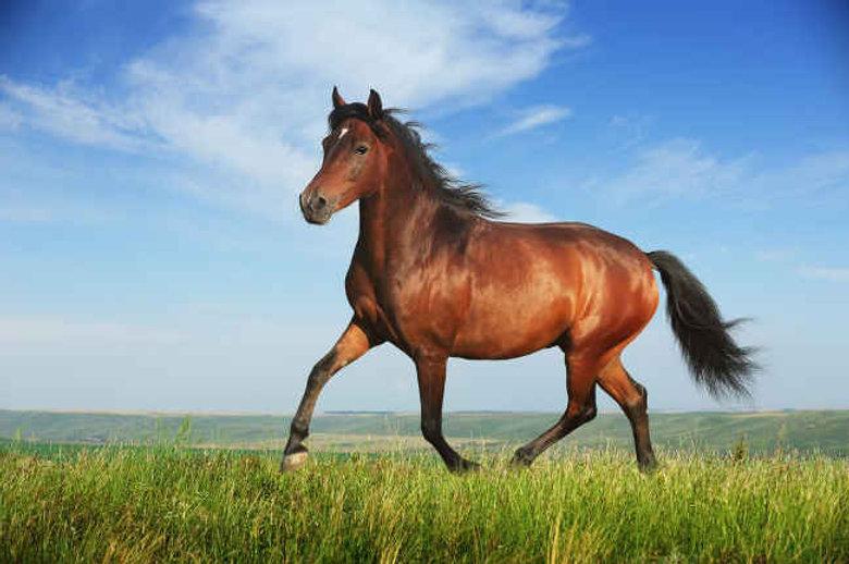 2119-cheval.jpg