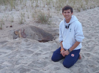 Nesting turtle.jpg