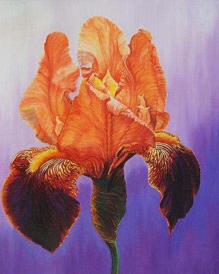 Orange iris - acrylic original painting