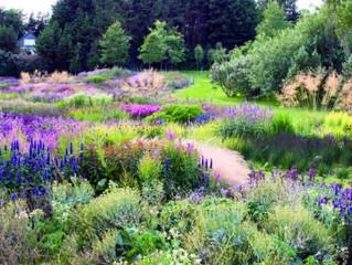 Native Plants and the Contemporary Garden