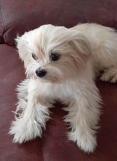 EPERO FAMILY DOG.jpg