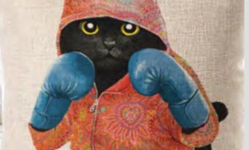 Cojín de Gato boxeador «Toro Salvaje»