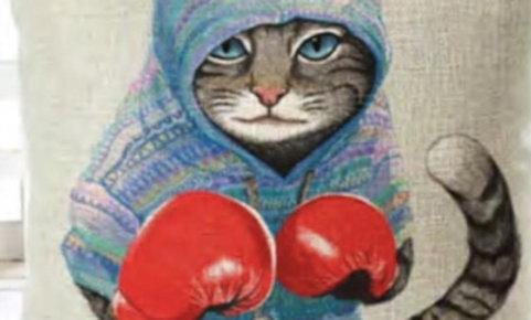 Cojín gato boxeador » Rocky Balboa»