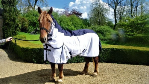 Heavy Horse Combo Fly Rug With Waterproof Panel