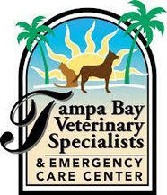 Tampa Bay Veterinary Specialist