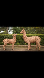 Two Alpacas.jpg