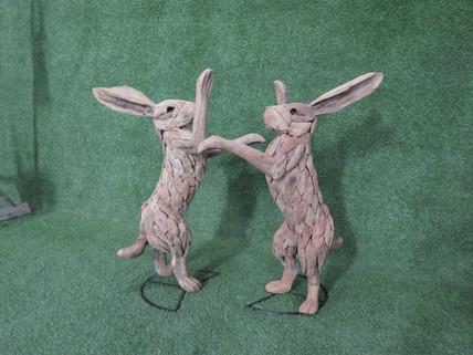 Rabbit fighting