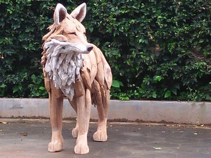 Fox looking across