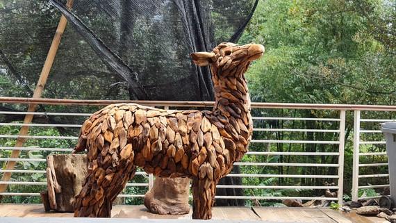 Alpaca posing up